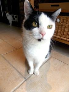 Harrie's cat Pickle, she's soooo cuteee