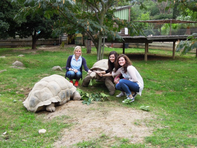 Julia, me and Kam with our new tortoise friends!
