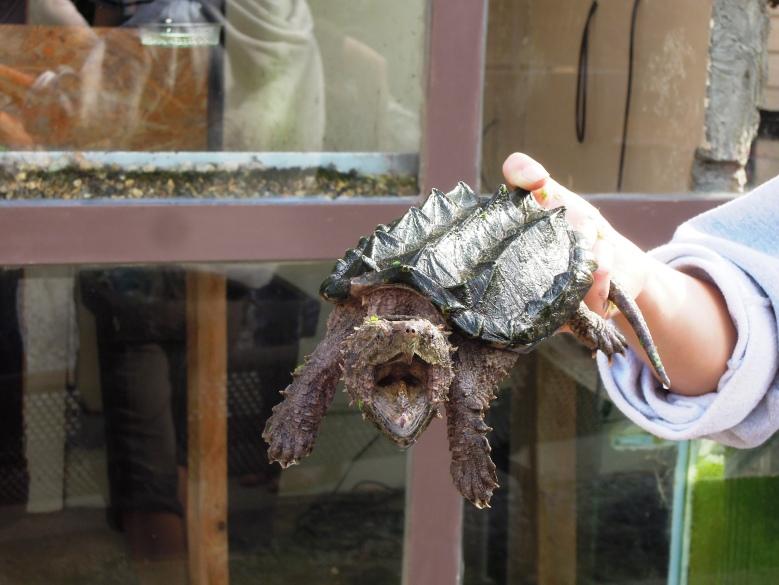World's most dangerous tortoise