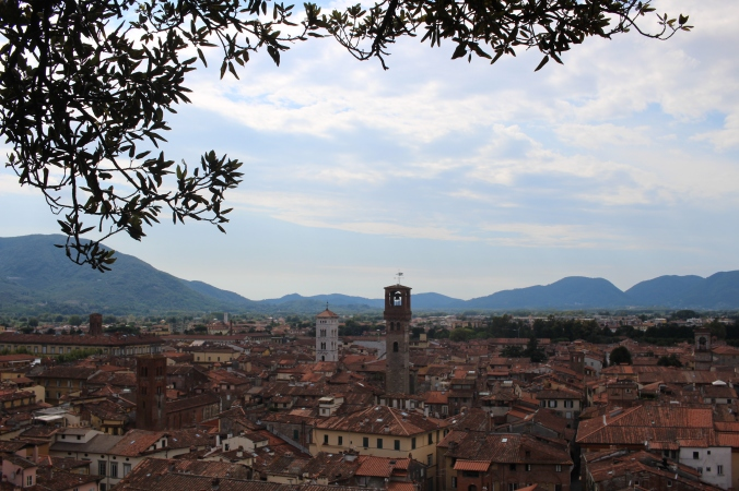 View from the Guinigi Tower