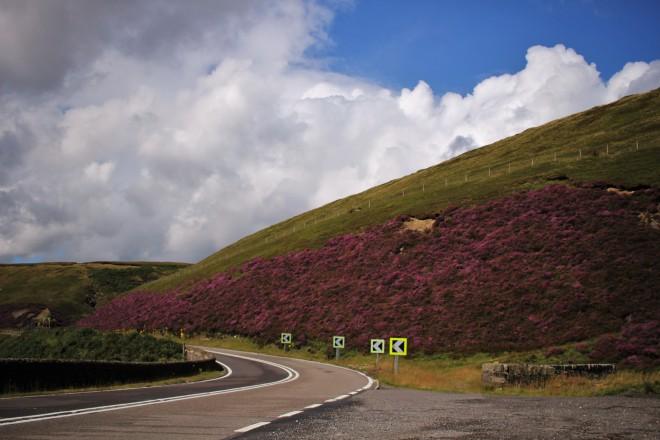 Purple heather on the Snake Pass
