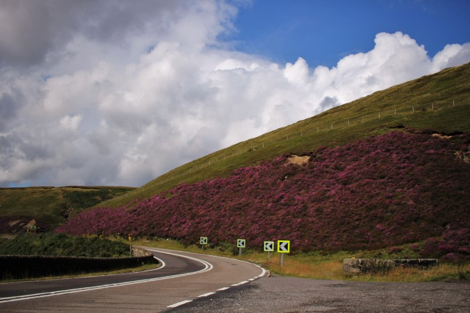 Purple heather on the Snake Pass
