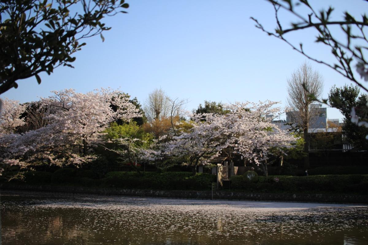 Japan Series: Kamakura